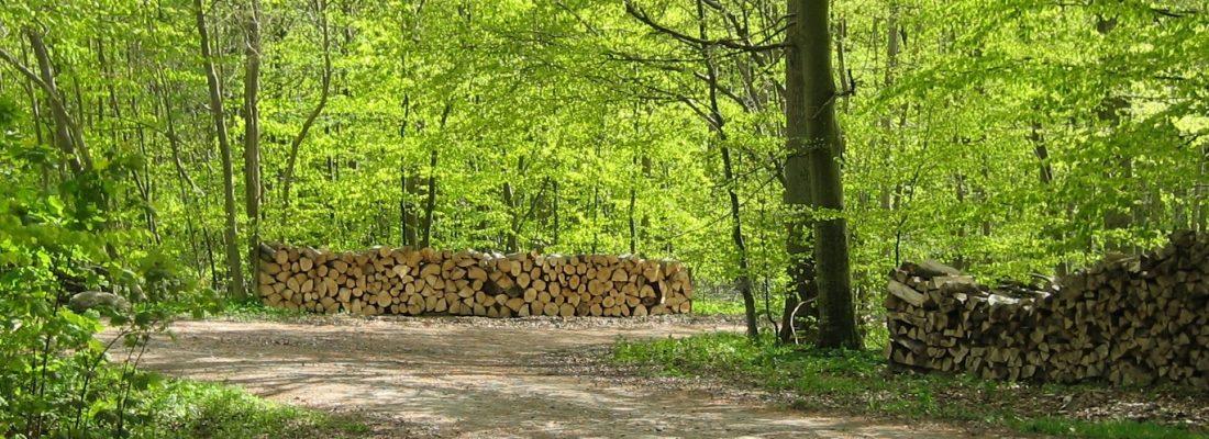 Brændestabel i skoven